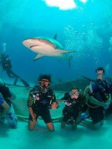 Kids-Sea-Camp-Family-Diver-thumb-300x400