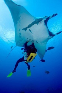 Palau-Scuba-Diving-023L